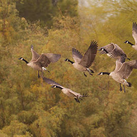 Ruth Jolly - The Geese as they Fly