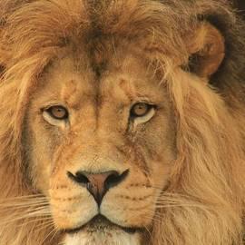 Laddie Halupa - The Glory of a King