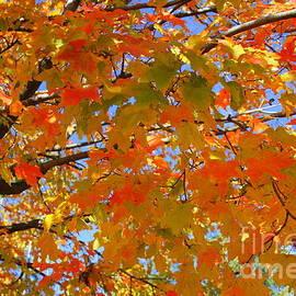 Dora Sofia Caputo Photographic Art and Design - The Golden Leaves of Autumn