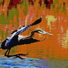 Tom Janca - The Great Blue Heron Jumps To Flight