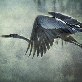 Saija  Lehtonen - The Great Blue Heron