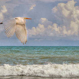 Kathy Baccari - The Great Egret And The Ocean