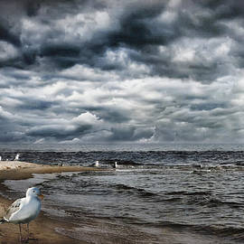 Evie Carrier - The Gull Ludington Michigan