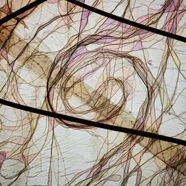Steve Taylor - The Hair Net