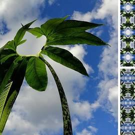 Tres Folia - The heart in Nature
