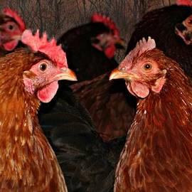 Barbara S Nickerson - The Hen House