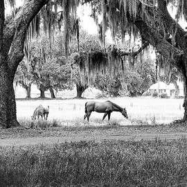Scott Hansen - The Horses of Coosaw Plantation
