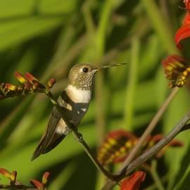 Jeff Swan - The Humming Bird Rests