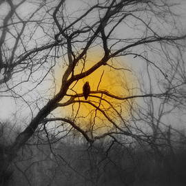 Kathy Barney - The Hunters Moon and the Barred Owl