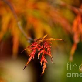 Elmar Langle - The Joy of Fall