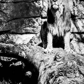 Stwayne Keubrick - The jungle king