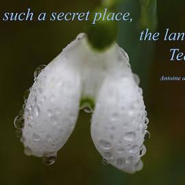 Rumyana Whitcher - The Land Of Tears