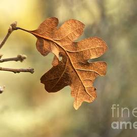 Sean Griffin - The Last Leaf