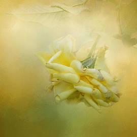 Jai Johnson - The Last Yellow Rose