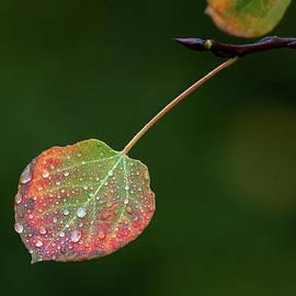 Jim Garrison - The Latter Rain
