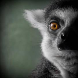 Ernie Echols - The Lemur 2