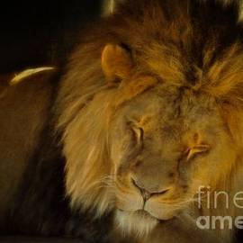 Dorothy Pinder - The Lion Sleeps