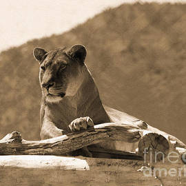 Janice Rae Pariza - The Lioness Out of Africa
