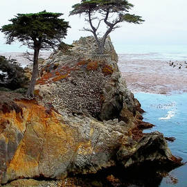 Glenn McCarthy Art and Photography - The Lone Cypress - Pebble Beach