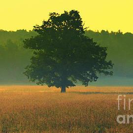 Andrew Lorimer - The Lonely Oak Tree