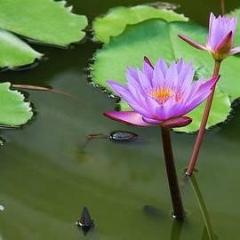 Ajithaa Edirimane - The Lotus