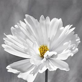 Kim Hojnacki - The Love Flower