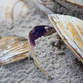Cynthia Guinn - Shells In The Sand