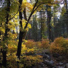 Saija  Lehtonen - The Magic of Autumn