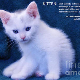 Elaine Manley - The Meaning of a Kitten