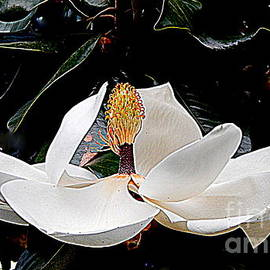 Michael Hoard - The Metamorphous Of The Southern Magnolia Spring Equinox In New Orleans Louisiana
