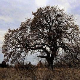Carolyn Fletcher - The Mighty Oak