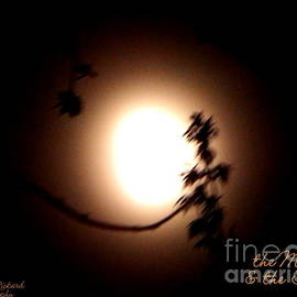 Bobbee Rickard - The Moon and the Tree