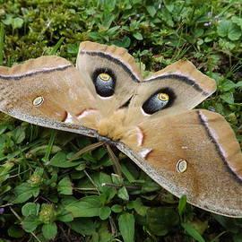 Dennis Pintoski - The Moth