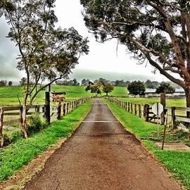 Julianne Baltrus - The Narrow Road