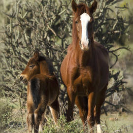 Saija  Lehtonen - The Next Generation of Mustangs