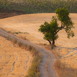 Jawaharlal Layachi - The old almond tree on the road