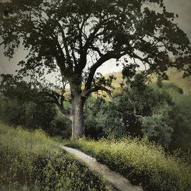 Parrish Todd - The Old Chumash Trail