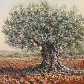 Miki Karni - The olive tree in the valley