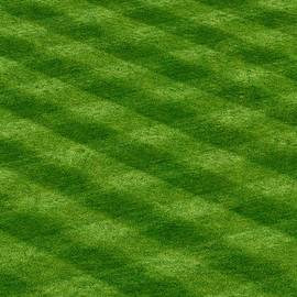 The Comerica Park Outfield Grass