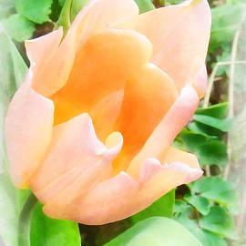 Steve Taylor - The Pale Orange Tulip