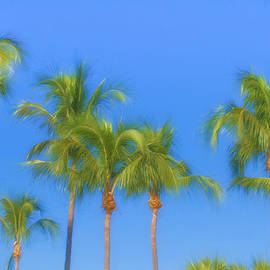 Kim Hojnacki - The Palms