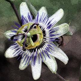 Janice Rae Pariza - The Passion Flower in Abstract