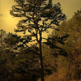 Nina Fosdick - The Pine Tree