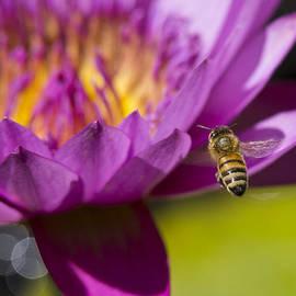 Priya Ghose - The Promise Of Pollen