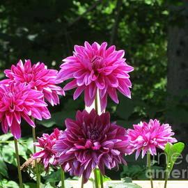 Stephanie  Varner - The Purple Garden