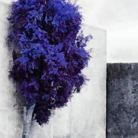 Steve Taylor - The Purple
