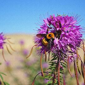 Lisa Holland-Gillem - The Rare Bee 1