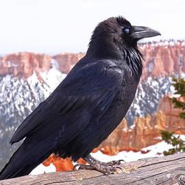Rona Black - The Raven