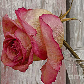 Nick  Boren - The Reception Rose