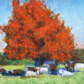 David Zimmerman - The Red Maple Group small